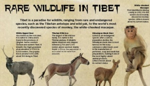China Daily Tibetan Font